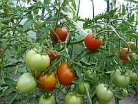 Советы опытных огородников: как часто поливать помидоры в теплице