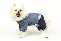 "Комбинезон ""Blue handsome"" для собак"