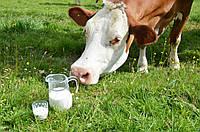 """ЗЦМ """"Теленок.JUNIOR"""" (с 30 дня, 30% молока) Сухое Молоко для телят, поросят"""