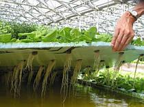 Применение удобрений FloraGrowing для промышленной гидропоники