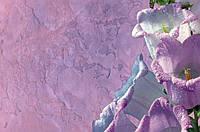 """ДЕКОРАТИВНАЯ МАЛЬТИЙСКАЯ ФРЕСКА .Декоративные венецианские штукатурки киев """"под ключ"""" РАБОТА+МАТЕРИАЛЫ"""