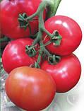 Касамори F1 семена томата высокорослого розового Kitano 100 шт, фото 3