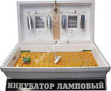 Инкубатор Рябушка (100 яиц) автоматический, фото 2