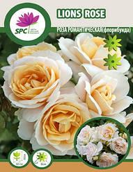 Роза романтическая Lions Rose
