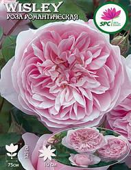 Роза романтическая Wisley 2008
