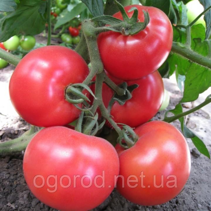 Китару(KS 14 F1) семена томата высокорослого розового Kitano 100 шт
