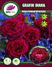 Роза романтическая Gräfin Diana