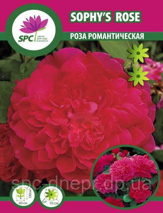 Роза романтическая Sophy's Rose