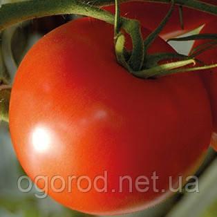 Ралли F1 500 шт. семена томата высокорослого Enza Zaden Голландия
