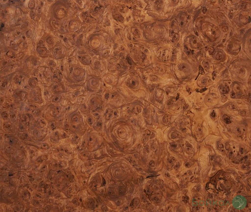 Шпон корней и капа Амбойны 0,6 мм (оптом)