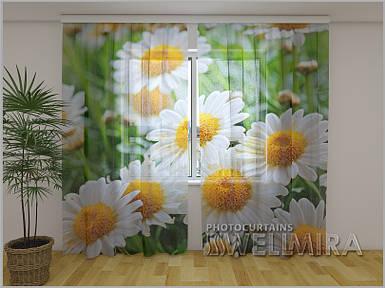 ФотоТюль Белые ромашки 250 см х 260 см фото тюль с рисунком цветы