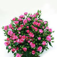 Букеты и цветочные композиции с доставкой