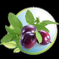 Мятная слива (Mint Plum)