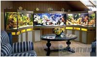 Нестандартные аквариумы