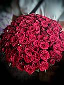 51 роза престиж