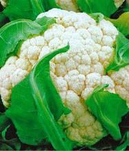 Семена капусты цветной Игл (имп)