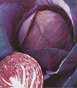 Семена капусты краснокачанной Кисендрук (имп), фото 2