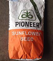 Гибрид подсолнечника Пионер ПР64E71 ЭкспрессСан (Pioneer PR64E71)