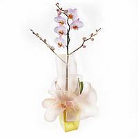 Ваш cад Орхидея фаленопсис 1 цветонос в подарочной упаковке