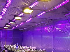 Лучшие фитолампы: как правильно выбрать лампу для рассады