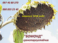 Семена подсолнечника Бомонд, (фракция экстра) гранстароустойчивый гибрид F1, (Семанс Франция)