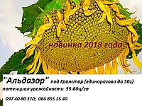 Семена подсолнечника, семена подсолнуха, Альдазор, гранстароустойчивый, гибрид F1, экстра фракция