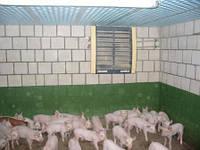 Отопление Свинофермы, фото 1