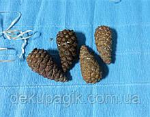 Шишки сосни натуральні не розкриті 5,5-6,5 см, набір 4шт