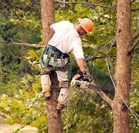 Санитарная обрезка деревьев, обрезка опасных сухих поврежденных и сломаных веток в Киеве