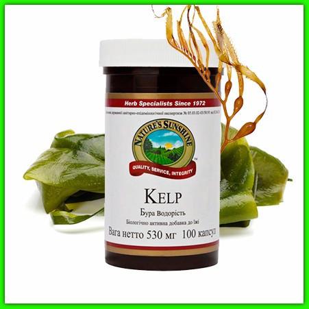 Бурая водоросль, Келп НСП (Kelp Nsp). Для щитовидной железы. При йододефиците. Иммунная система, обмен веществ