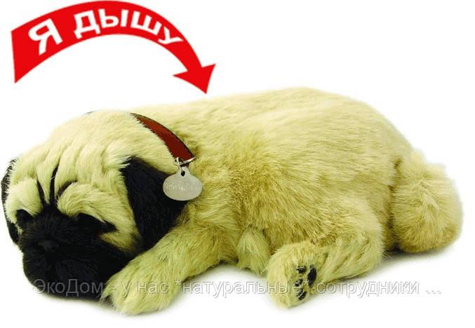 Щенок, который дышит и сопит - МОПС
