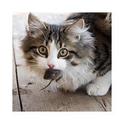 Как действует крысиный яд на кошек, фото№4