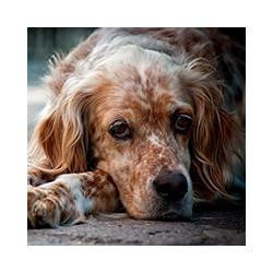 Как действует крысиный яд на собак, фото№5
