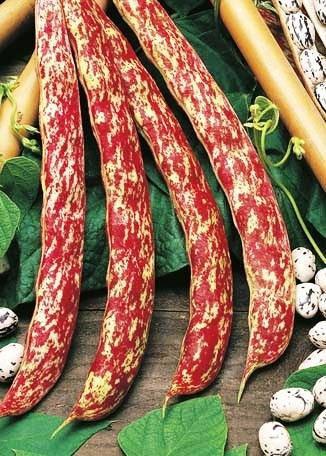 Семена фасоли Борлотто вьющаяся, фото 2