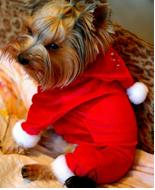 Костюм Санта-Клаус 22-24см (XS) для собак