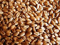 У сфері насінництва було затверджено нові методичні вимоги щодо збереження сортових та посівних якостей насіння зернових культур.