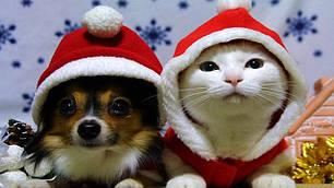Ждем Деда мороза !