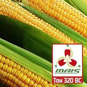 Насіння кукурудзи Маїс Дніпро