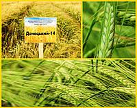 Семена ячмень Донецкий 14 (элита)
