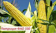 Семена кукурузы Патриция ФАО 300 (экстра фракция) кремнистая,