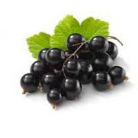 Cоветы по выращивнию черной смородины