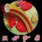 """Харчової садовий шланг для поливу SYMMER GARDEN """"Fruit+Berry"""" 3/4"""" 20м, фото 3"""