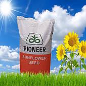 Семена подсолнечника Pioneer P 64 LE 25