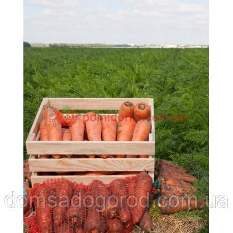 Морковь МИРАФЛОРЕС F1 Clausе 100 000 шт ( 2.0 -2.25 )