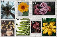 АКЦИЯ -30%!! Постеры для дома, гостинной, цветы,  картины с цветамы глянцевые!!