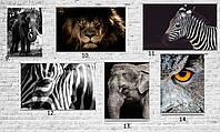 ТОП! Плакаты для кухни, постеры на подарок кот тигр лев собака волк животные города машины еда цветы на стену