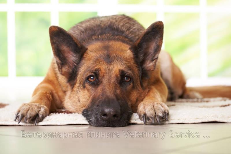 Грыжа промежностная: животное до 5 кг (одна сторона)