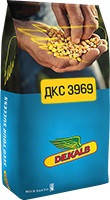 Семена кукурузы DKC 3969 / ДКC 3969 ФАО 320 (пос.ед.) Акселерон Элит