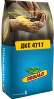 Насіння кукурудзи DKC 4717 / ДКC 4717 ФАО 400 (пос.ед.) Акселерон Элит