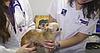 Лечение ран (ушивание) - 4 категории